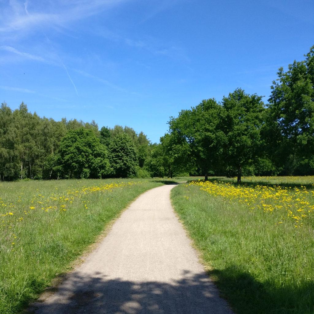 Einzelcoaching sonniger Weg