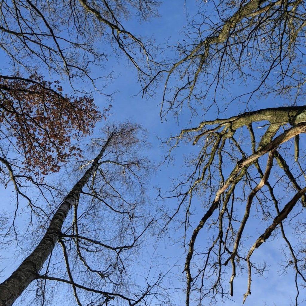 Ausgelaugt Foto Bäume